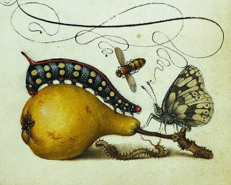 caterpillar-pear
