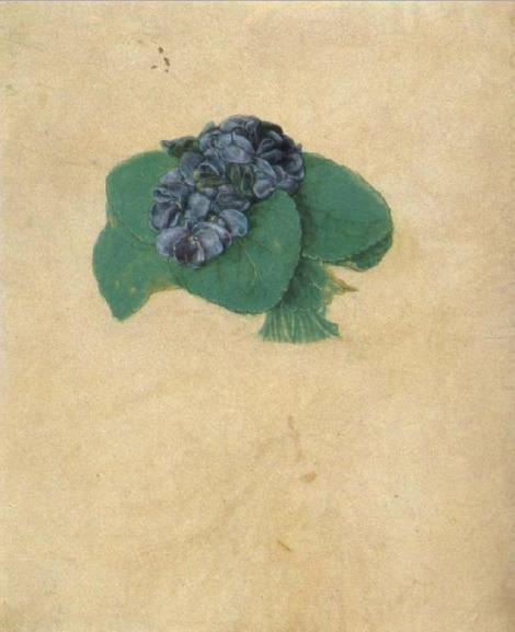 durer violets