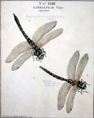 Libellulae, Moses Harris, 1782