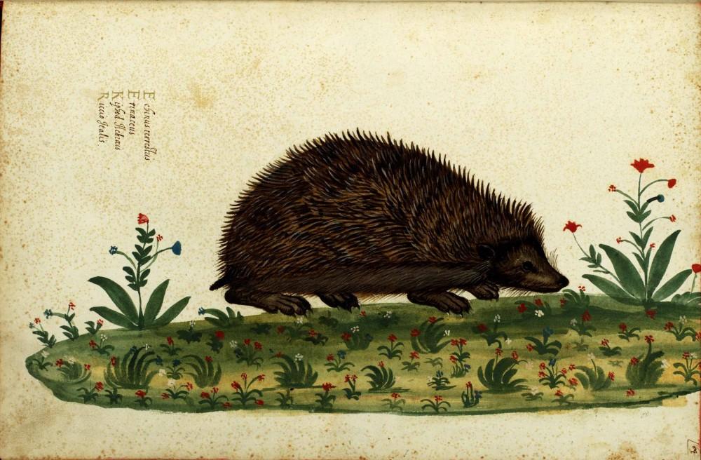 hedgehog paul muldoon