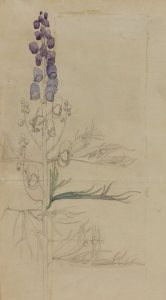 Monkshood, Charles Rennie Mackintosh
