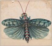 Green Locust, Alexander Marshal
