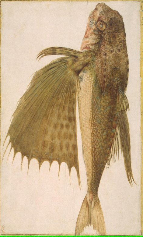 ligozzi-jacopo-fish-flying-gurnard