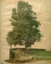 Linden Tree On A Bastion, Albrecht Durer