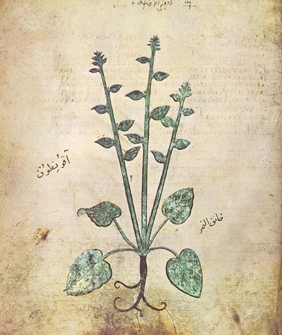 Πεδάνιος Διοσκουρίδης (Pedanius Dioscorides) circa 40—90 AD