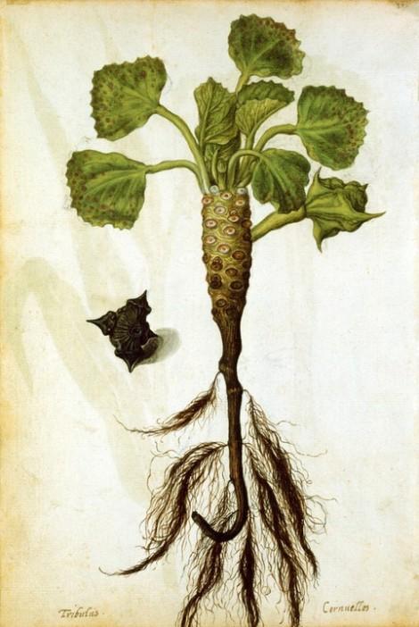 太平间(c。1533–1588)菱角