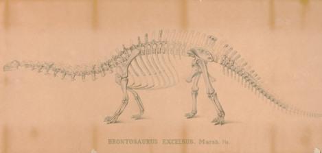 Brontosaurus, Sketch by Othniel Charles Marsh (1831 – 1899), paleontologist