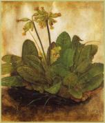 "Albrecht Dürer, Tuft of Cowslips, inscribed ""1526 / AD"""
