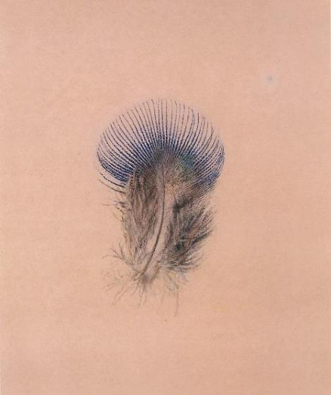 John Ruskin, Study of a peacock feather, 1863