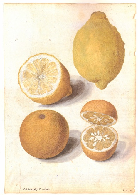 l & o seville fruits jlmdm