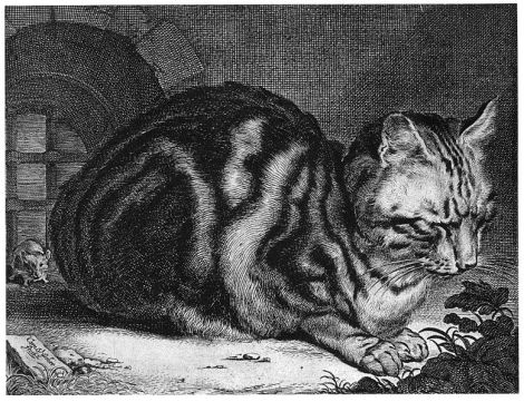 cat sleeping Cornelis Visscher (1629 – 1658) etcher