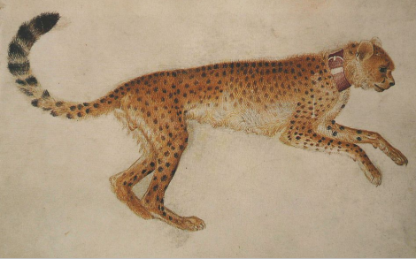 pisanello-cheetah. leap jpg