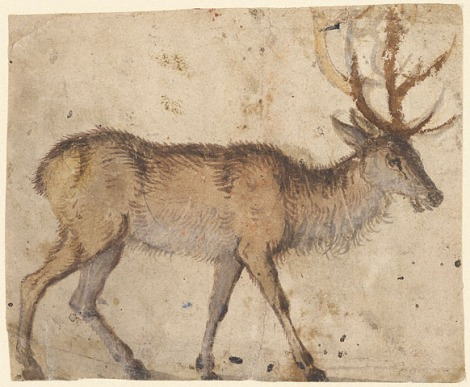cranach-stag