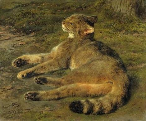 bonheur wild cat