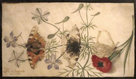 1280px-Studies_of_Flowers_and_Butterflies,_watercolor_painting_on_parchment_by_Joris_Hoefnagel,_Flanders,_1590,_HAA