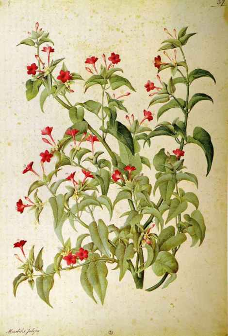 ligozzi plant