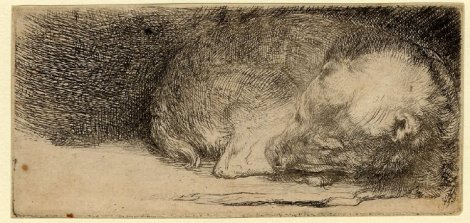 the sleeping puppy rembrandt