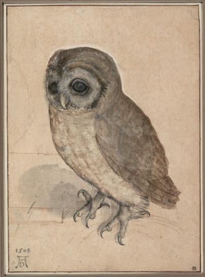 durer-owl
