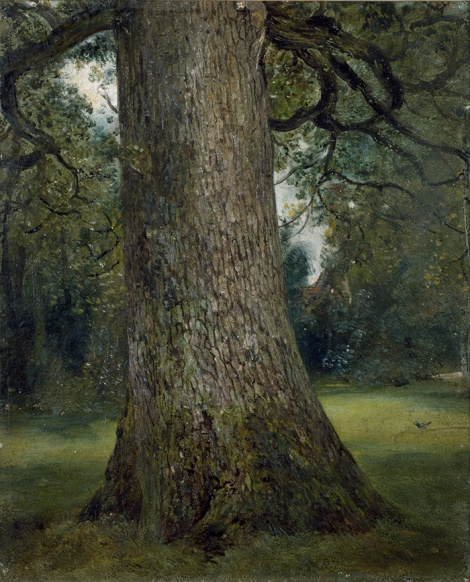 Study of the Trunk of an Elm Tree' John Constable,