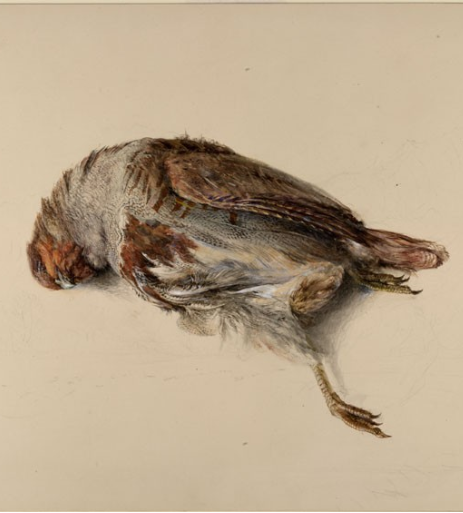 dead bird ruskin partridge