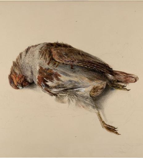 死鸟罗斯金·帕特里奇