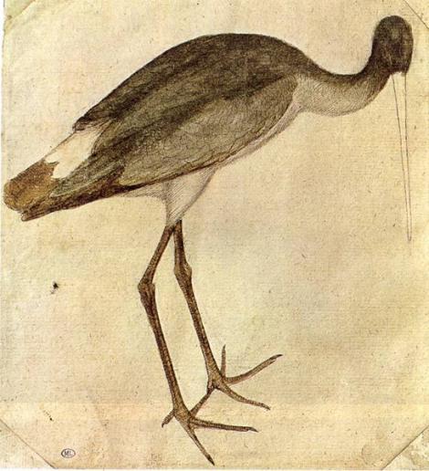 Pisanello Stork