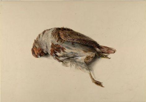 ruskin partridge