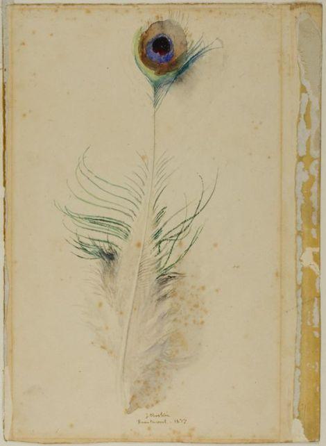 ruskin peacock tail