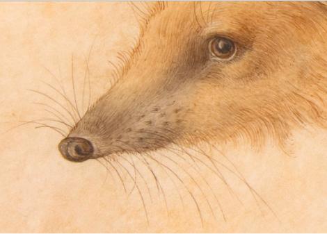 hedgehog detail