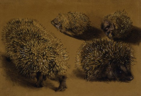menzel hedgehogs