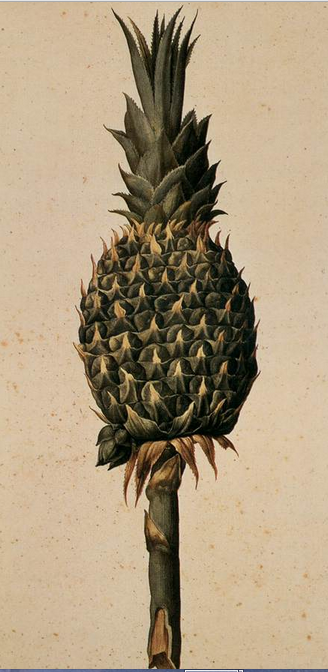 pineapple ligozzi