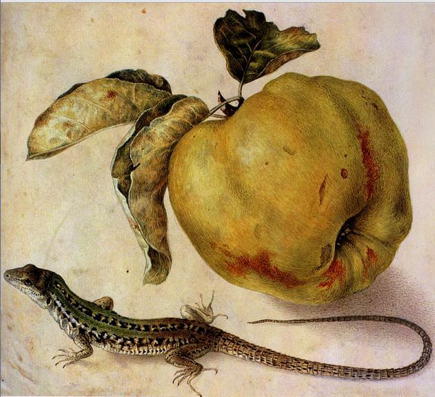 apple lizard