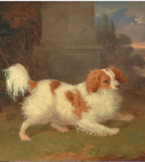 ww blenheim spaniel