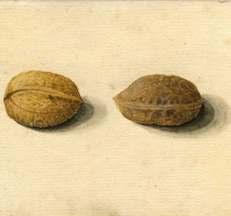 twowalnuts