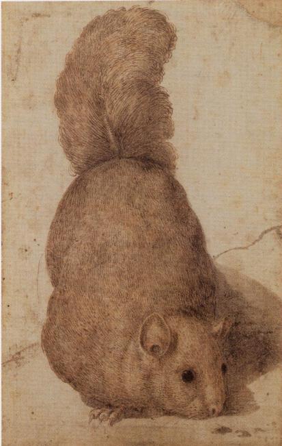 udine squirrel