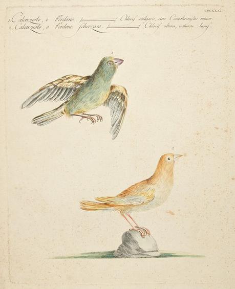storia uccelli