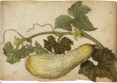 jacques-le-moyne-(de-morgues)-a-cucumber,-with-its-leaves-(study)
