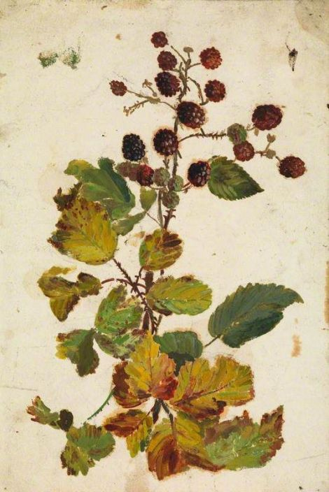 Beatrix Whistler blackberries