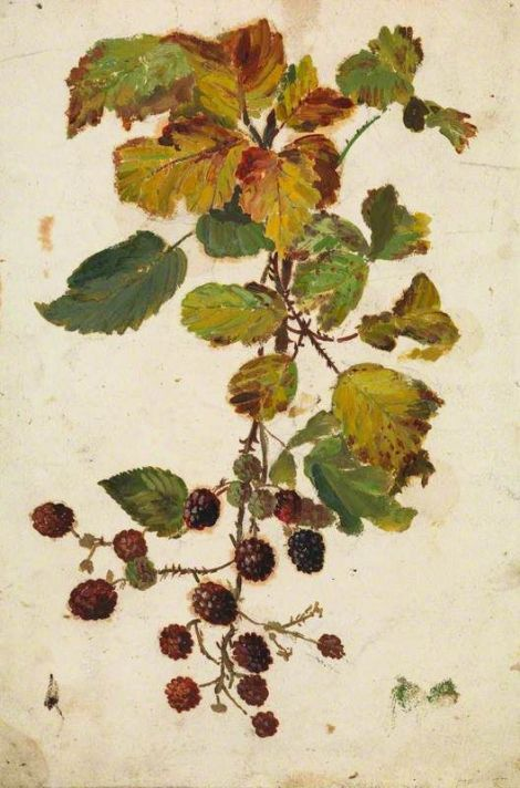 beatrix-whistler-blackberries2