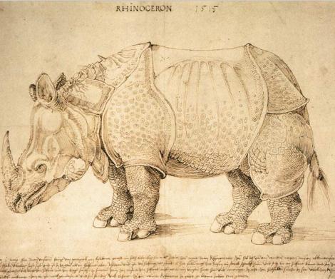 rhinoceron