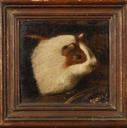 Guinea pig Udine