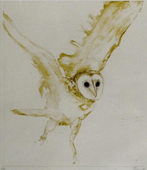 young barn owl elisabeth frink