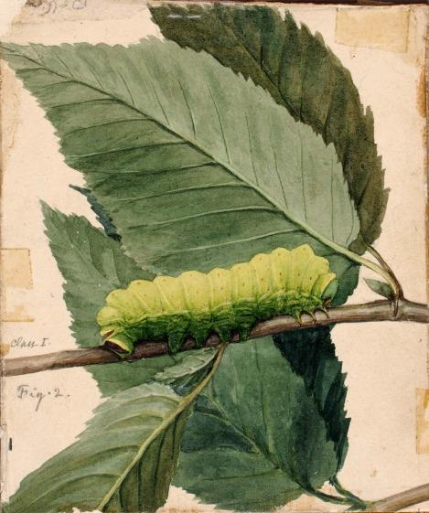 camouflage caterpillar