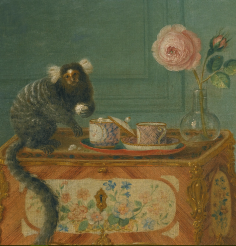 marmoset-teacup