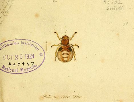 fauna_germanica_diptera_1793_vol-1_p10_pediculus_cervi_fabr