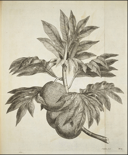 parkinson fruit